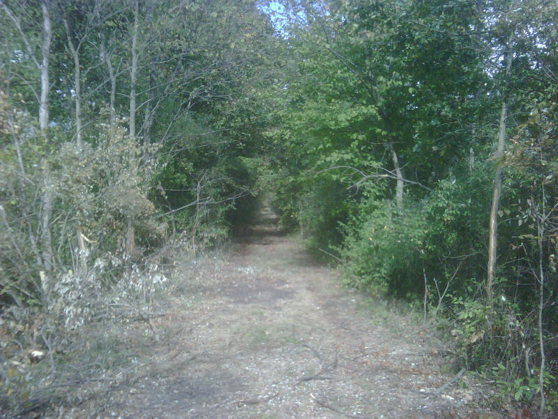 Wooded Area West of M-52